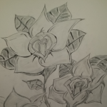 Róża ….