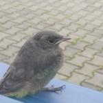 taki ptak co robi tak :)